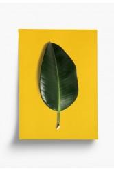 Plakát Pokojovky – Ficus Elastica