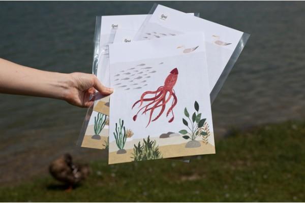 Egreš chobotnica A4print