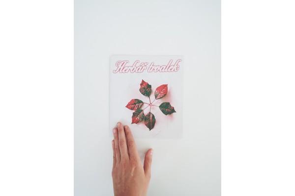 Herbář trvalek – Anna Pleštilová